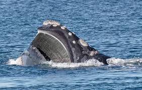 GIONA  IL  PROFETA (studio del libro) dans Teologia baleine